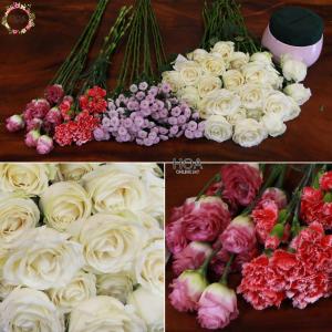 50 CÀNH HOA LẺ: hoa hồng, cẩm chướng, cát tường