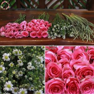 42 CÀNH HOA LẺ: hoa hồng, thạch thảo, cát tường...