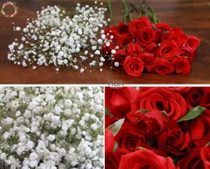 HOA LẺ: 20 hoa hồng Đà Lạt, baby...