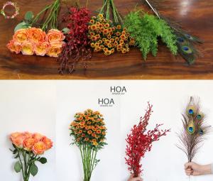 34 CÀNH HOA LẺ: hoa hồng Ecuador, lan mokara,...