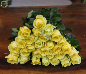 HOA LẺ: 100 hoa hồng Premium